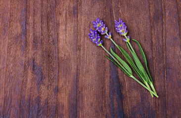 lavender on wood background