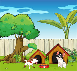Garden Poster Dogs Two dogs inside the fence