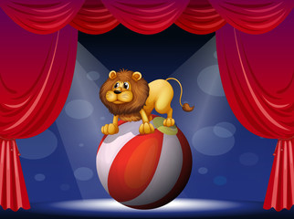 Keuken foto achterwand Beren A lion performing at the circus