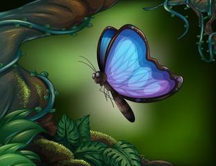 Keuken foto achterwand Vlinders A butterfly in the rainforest