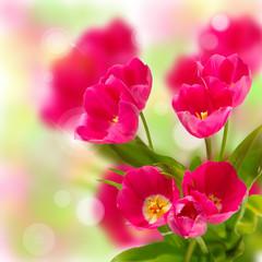 Beautiful tulips on a bokeh background