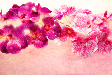 Lovely purple and pink orchids on a soft pink background