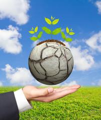 Business man hand holding Green tree on a barren world
