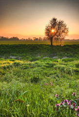 Lovely early morning spring scenery