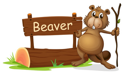 A signboard and a beaver with a stick