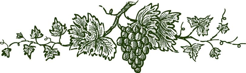 grape branch Fototapete