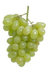 Weintrauben auf weißem Hintergrund