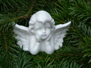 weisser Engel auf Tanne