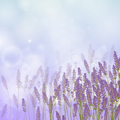 Vector Illustration of a Lavender Background