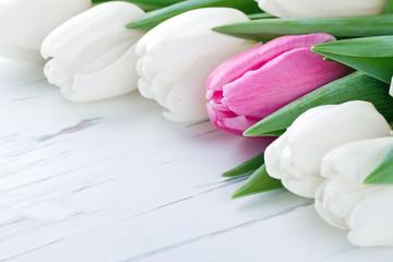 Pink tulip among white tulips