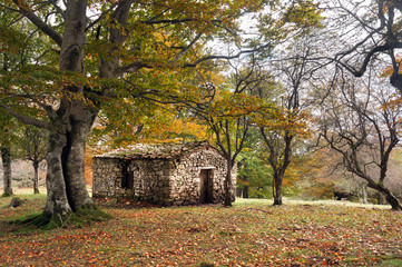 Wall Mural - stone cabin in autumn forest