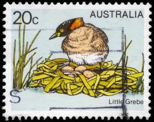 AUSTRALIA - CIRCA 1978 Little Grebe
