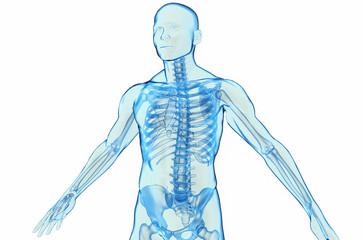 Transparent blue human body 3D model on white background