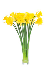 Bouqut of yellow lent lilyl daffodil or narcissus