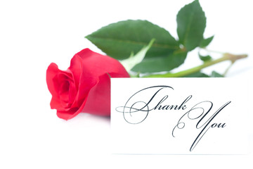 beautiful red rose and a card with the words thank you isolated