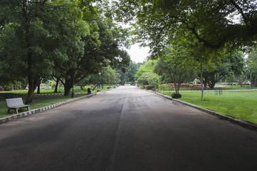Trees along the road, Lal Bagh Botanical Garden, Bangalore,