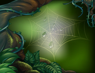 A spider web in a rainforest