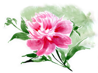 Watercolor flower peony