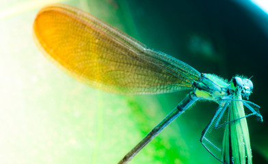insect damsefly dragonfly isolated