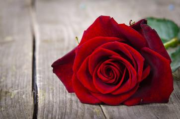 rote rose auf holzbrett