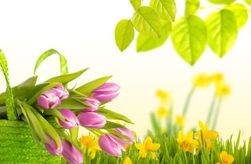 tulpen natur