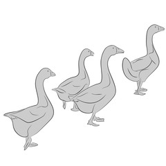 An a vector illustration of Goose