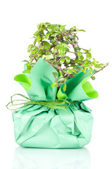 Bonsai wrapped in paper gift over a white background