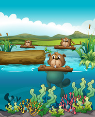 Foto op Plexiglas Rivier, meer Three beavers in the river