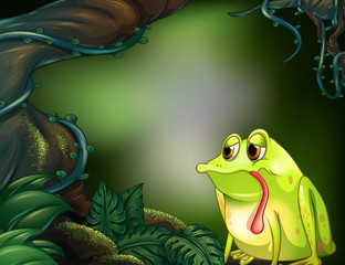 A lonely frog in a rainforest