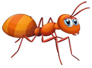 A big ant