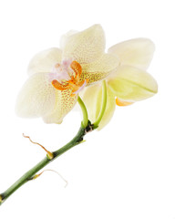 Orchid arrangement centerpiece isolated on white background