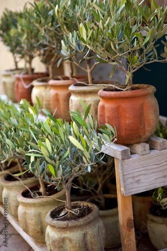 Olivier, provence, sud, arbre, pot, jardin, plante, olive\