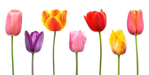 Spring tulips in assorted colors