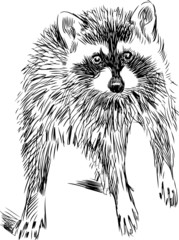Door stickers Hand drawn Sketch of animals surprised raccoon