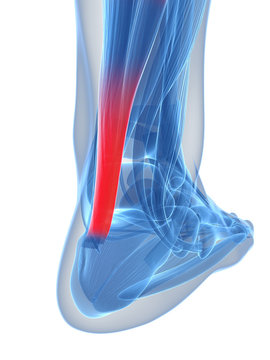 3d rendered illustration of the achilles tendon