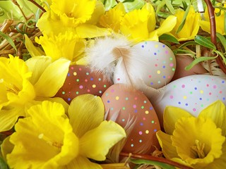 easter eggs to the chicken with flowers