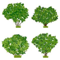 Summer bush vector set