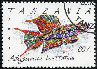 stamp printed in Tanzania shows Aphyosemion bivittatum