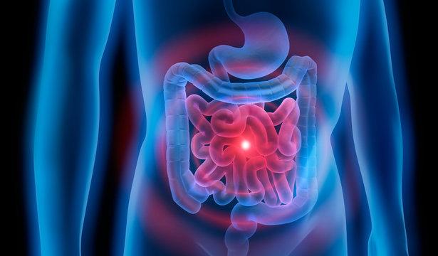 Magen-Darm-Trakt 2