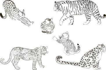 A set of  large predatory cat. Vector illustration.