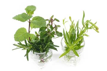 variety fresh herbs on white background