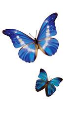 blue morpho with white stripes