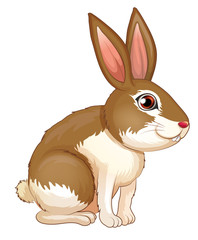 A fat brown rabbit
