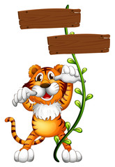 A tiger at the back of a two-plank empty board