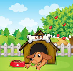 Poster Dogs A dog with a ball inside a doghouse