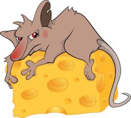 Rat and cheese piece cartoon