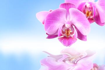 Storczyk, fioletowy, na błękitnym tle z odbiciem w wodzie.