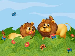 Keuken foto achterwand Vlinders Two lions in the garden with butterflies