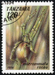 stamp printed in Tanzania shows image of a micrommata rosea