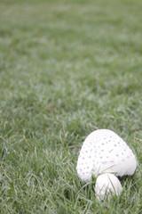 Dome Mushrooms
